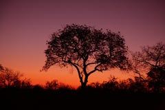 Sonnenuntergang auf Sabi Sanden Lizenzfreies Stockfoto