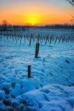 Sonnenuntergang auf schneebedecktem Weinberg Stockbild