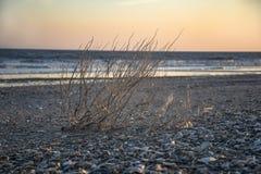 Sonnenuntergang auf wildem Strand lizenzfreies stockbild
