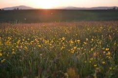 Sonnenuntergang auf Zlatibor Lizenzfreies Stockbild
