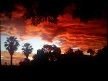 Sonnenuntergang-Australien-magill nettes 2014 Stockfoto