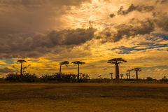 Sonnenuntergang in Avenue de Baobab, Madagaskar Stockfotos