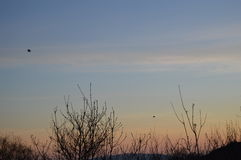 Sonnenuntergang, Bäume und Vögel Lizenzfreies Stockfoto