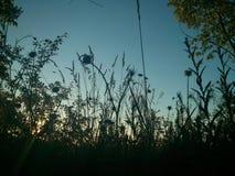 Sonnenuntergang-Büsche Stockfotografie