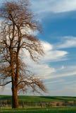 Sonnenuntergang-Baum Stockfotos