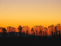 Sonnenuntergang-Baum Stockbilder