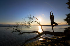 Sonnenuntergang-Baum-Haltung Lizenzfreies Stockbild