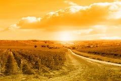 Sonnenuntergang über dem Weinberg Lizenzfreie Stockfotos