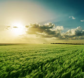 Sonnenuntergang über grünem Feld Lizenzfreies Stockfoto