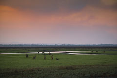 Sonnenuntergang über Nationalpark Gorongosa Lizenzfreie Stockfotos