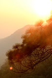 Sonnenuntergang am Berg, Phu Kra Dueng, Loei Stockfotografie