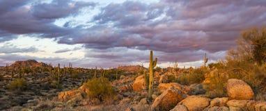Sonnenuntergang-Bild der Braun-Ranch-Konserve in Nord-Scottsdale, AZ stockfoto