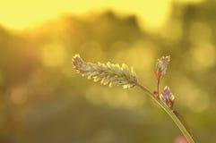 Sonnenuntergang-Blumen Stockbilder