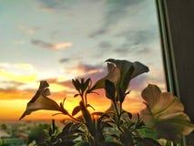 Sonnenuntergang-Blumen Lizenzfreie Stockfotos