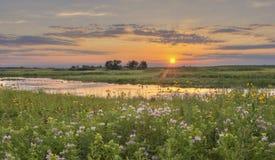 Sonnenuntergang am Blumen-Feld Lizenzfreie Stockbilder