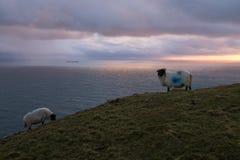 Sonnenuntergang in den Bergen mit Schafen. Lizenzfreie Stockfotografie