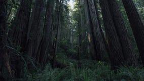 Sonnenuntergang in den Rothölzern Nationalpark, Kalifornien stock video