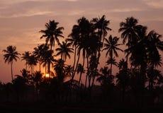 Sonnenuntergang an den Stauwassern von Kerala Stockfotos