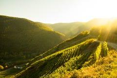 Sonnenuntergang in den Weinbergen von Ahrtal in Ahrweiler lizenzfreie stockfotografie