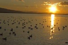 Sonnenuntergang in der Bucht mit Wasservögeln Lizenzfreie Stockfotos
