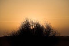 Sonnenuntergang an der Dubai-Wüste. Stockbilder