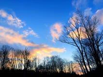 Sonnenuntergang, der im Wald glüht stockbild