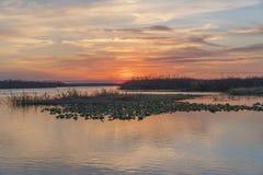 Sonnenuntergang an der Lager-Stechpalme nahe Melbourne, Florida Lizenzfreie Stockbilder
