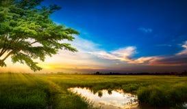 Sonnenuntergang an der ländlichen Szene Lizenzfreies Stockbild