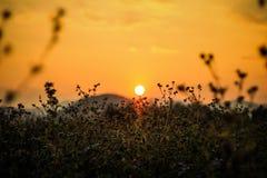 Sonnenuntergang an der Rasenfläche Lizenzfreie Stockfotografie