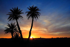 Sonnenuntergang in der Sahara-Wüste Stockfotos