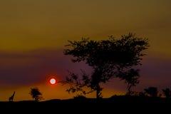 Sonnenuntergang in der Savanne Stockfoto