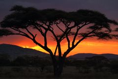 Sonnenuntergang in der Serengeti-Savanne lizenzfreie stockfotos