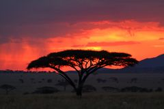 Sonnenuntergang in der Serengeti-Savanne stockfotos