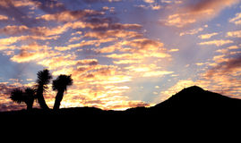 Sonnenuntergang in der Wüste Lizenzfreie Stockbilder