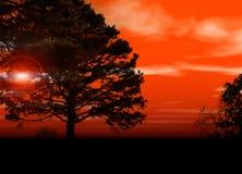 Sonnenuntergang durch Bäume Stockfotografie