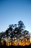 Sonnenuntergang durch Bäume Stockfotos