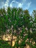 Sonnenuntergang durch Bäume Stockbild
