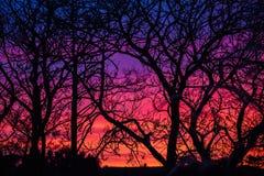 Sonnenuntergang durch Bäume in Irland stockbilder