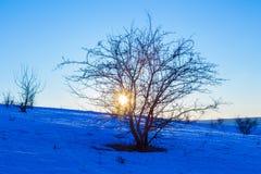 Sonnenuntergang durch Baum auf Hügel an der Winterlandschaft Stockbilder