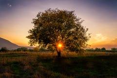 Sonnenuntergang durch Baumaste Lizenzfreies Stockfoto