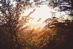 Sonnenuntergang durch Brunchs Stockfoto