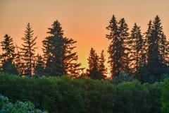 Sonnenuntergang durch den Garten Lizenzfreie Stockbilder