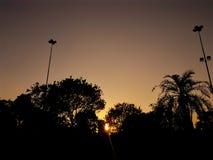 Sonnenuntergang durch die Bäume Stockbild