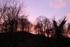 Sonnenuntergang durch die Bäume Lizenzfreie Stockfotografie
