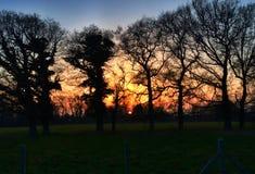 Sonnenuntergang durch die Bäume Lizenzfreie Stockbilder