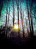 Sonnenuntergang durch die hohen Bäume Stockfotos