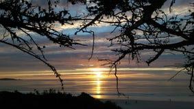 Sonnenuntergang durch die Niederlassungen Stockfoto