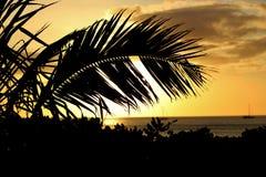 Sonnenuntergang durch ein Palmblatt Lizenzfreie Stockbilder