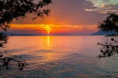 Sonnenuntergang durch Kiefer Lizenzfreies Stockbild