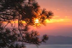 Sonnenuntergang durch Kiefernniederlassungen Stockfotografie